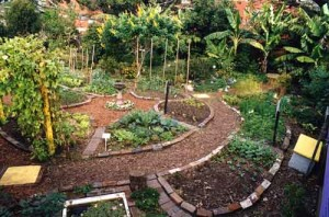 permaculture-gardening_from-innovation-diaries